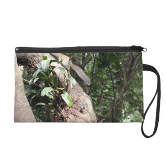 air plant in tree with squirrel hiding wristlets