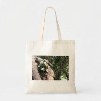 air plant in tree with squirrel hiding bag
