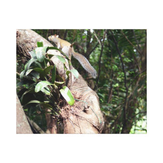 air plant in tree with squirrel hiding gallery wrap canvas