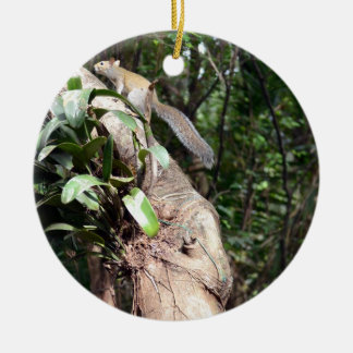 air plant in tree with squirrel hiding Double-Sided ceramic round christmas ornament