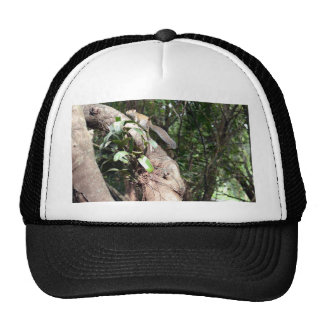 air plant in tree with squirrel hiding trucker hat
