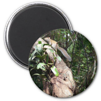 air plant in tree with squirrel hiding fridge magnet