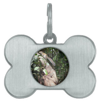 air plant in tree with squirrel hiding pet tag