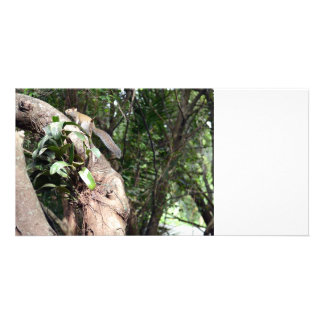 air plant in tree with squirrel hiding photo card