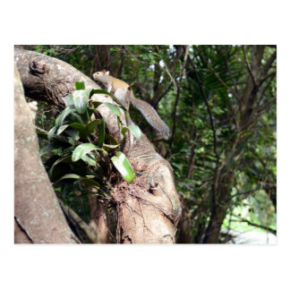 air plant in tree with squirrel hiding postcard