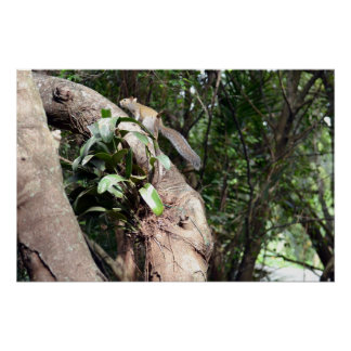 air plant in tree with squirrel hiding poster