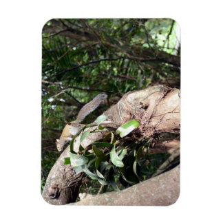 air plant in tree with squirrel hiding magnet