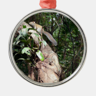 air plant in tree with squirrel hiding round metal christmas ornament