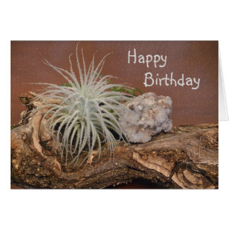 Air Plant Tectorum Card