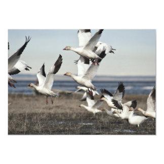 Airborne Snow Geese Card
