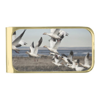 Airborne Snow Geese Gold Finish Money Clip