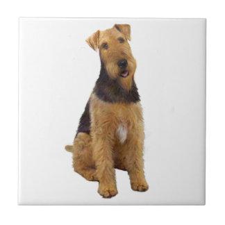 Airedael Terrier (c) - sentándose Teja Cerámica
