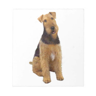 Airedael Terrier (c) - sentándose Libretas Para Notas
