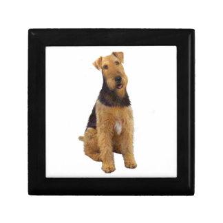 Airedael Terrier (c) - sentándose Caja De Regalo