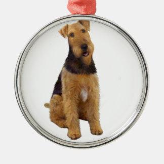 Airedael Terrier (c) - sentándose Ornatos