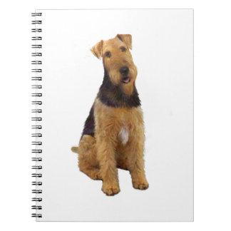 Airedael Terrier (c) - sentándose Libretas