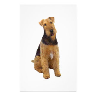 Airedael Terrier (c) - sentándose Papeleria Personalizada