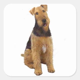 Airedael Terrier (c) - sentándose Calcomania Cuadrada Personalizada