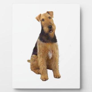 Airedael Terrier (c) - sentándose Placa