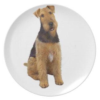 Airedael Terrier (c) - sentándose Platos De Comidas