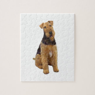 Airedael Terrier (c) - sentándose Rompecabezas Con Fotos