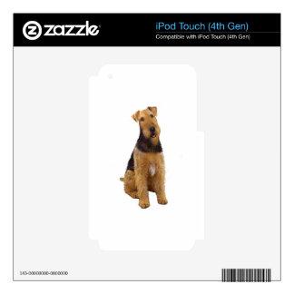 Airedael Terrier (c) - sentándose Calcomanías Para iPod Touch 4G