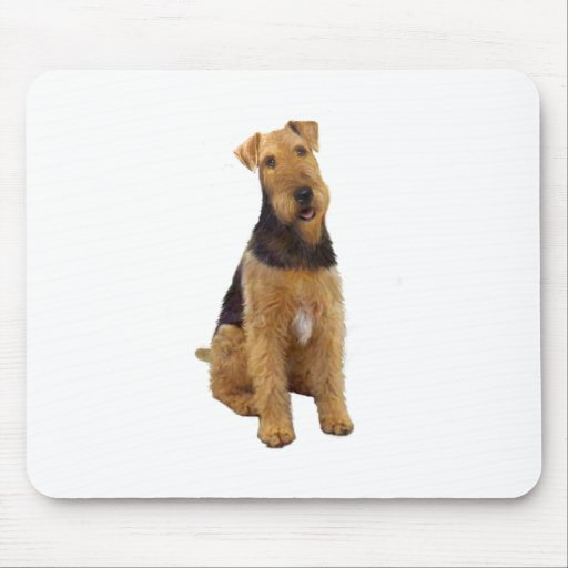 Airedael Terrier (c) - sentándose Tapete De Ratón