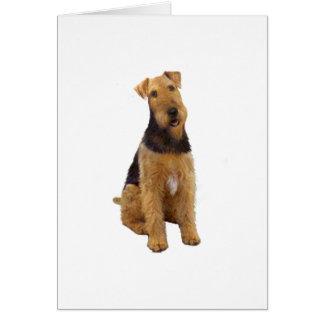 Airedael Terrier (c) - sentándose Felicitacion