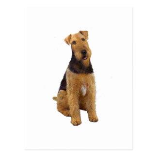 Airedael Terrier (c) - sentándose Tarjeta Postal