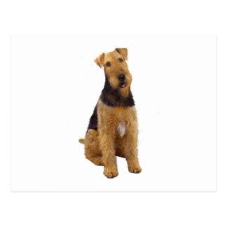 Airedael Terrier (c) - sentándose Tarjetas Postales