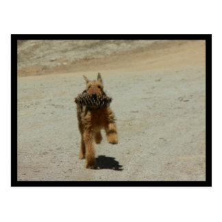 Airedale Dog Postcard