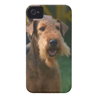Airedale lindo Terrier iPhone 4 Carcasas