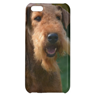 Airedale lindo Terrier