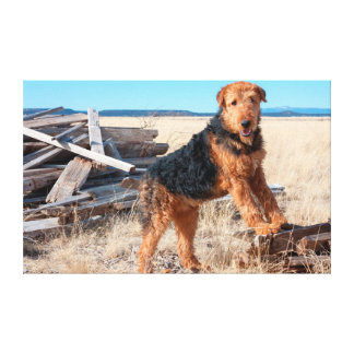 Airedale on a stack of wood canvas print
