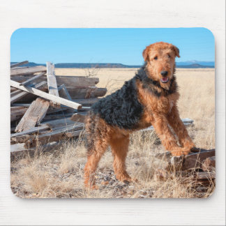 Airedale on a stack of wood mouse pad