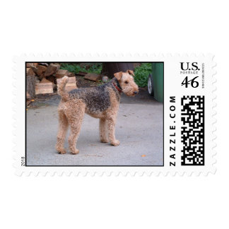 Airedale on alert stamp