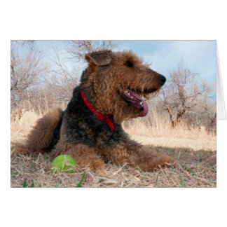 Airedale playing ball in dried grasses card