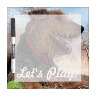 Airedale playing ball in dried grasses Dry-Erase board