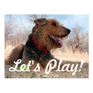 Airedale playing ball in dried grasses postcard
