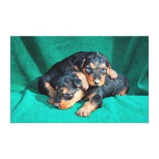 Airedale puppies lying on towel canvas print