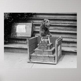 Airedale Terrier, 1922 de presidente Harding Póster