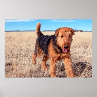 Airedale Terrier en un campo de hierbas secadas Póster