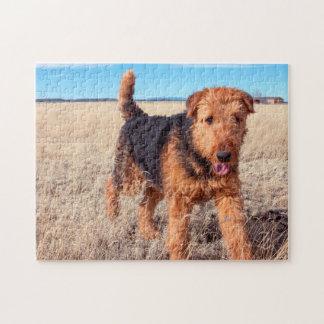 Airedale Terrier en un campo de hierbas secadas Puzzles Con Fotos