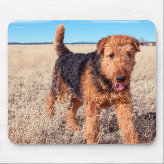 Airedale Terrier en un campo de hierbas secadas Tapete De Ratones