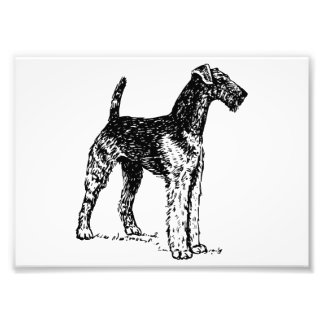 Airedale Terrier Photo Print