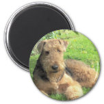 Airedale Terrier Round Magnet