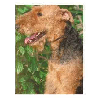Airedale Terrier Postal