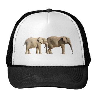 Aislado dos elefantes africanos gorro de camionero