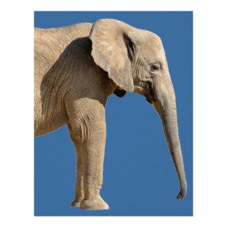 Aislado dos elefantes africanos plantillas de membrete