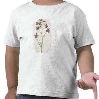 Ajacis del Delphinium c 1568 Camisetas